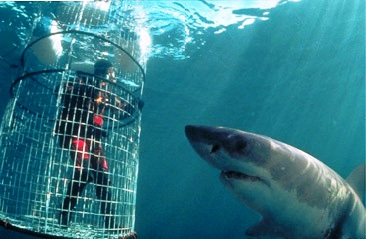 shark cage poker rules
